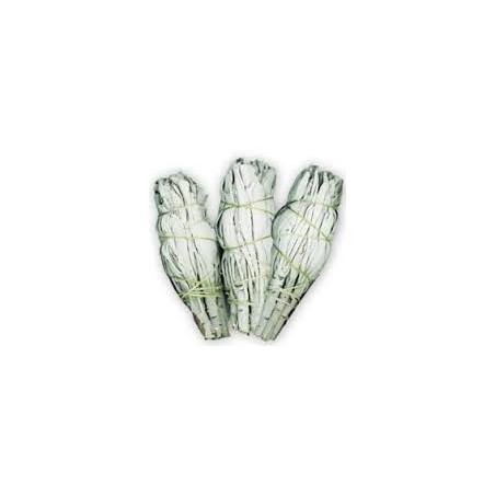 SAUGE BLANCHE DE CALIFORNIE QUALITE EXTRA PETIT FAGOT 10 a 12 cm